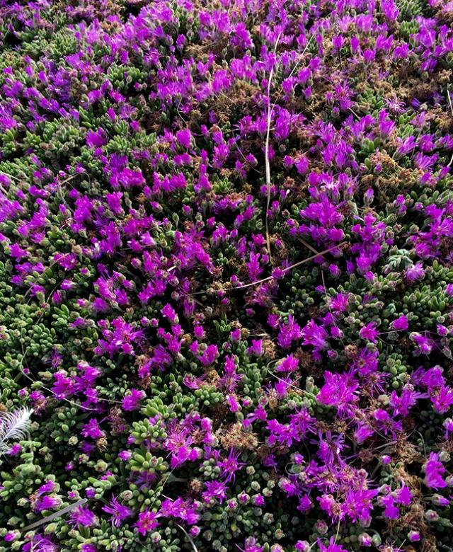 PurpleFlowers2Run426216