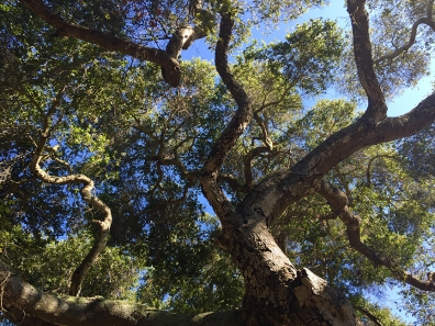 TrailRunTrees